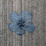 Suite Eight: 2015 Kauai Wabi-Sabi - Flowers and Concrete