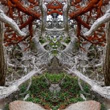 9 Point Lobos Skeletal Forest