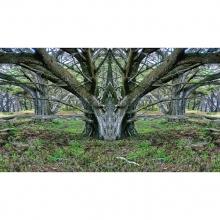 6 Mirrored Tree